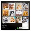 Poznámkový kalendář Kočky 2022, 30 × 30 cm