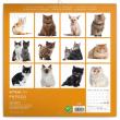 Poznámkový kalendář Koťata 2021, 30 × 30 cm