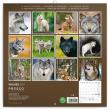 Poznámkový kalendář Vlci 2021, 30 × 30 cm